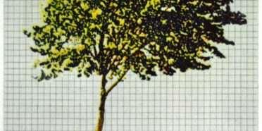 Træer fra mit regnehæfte 2  –  Frithioff Johansen – 2368B