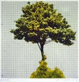 Frithioff Johansen - Træer fra mit regnehæfte 3  -  Frithioff Johansen - 2369B