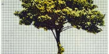 Træer fra mit regnehæfte 3  –  Frithioff Johansen – 2369B