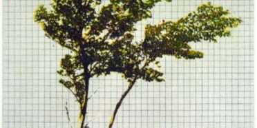 Træer fra mit regnehæfte 4  –  Frithioff Johansen – 2370B