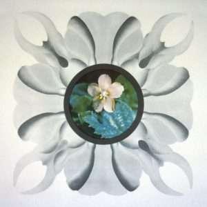 Gernot Bubenik - Blumen II - Gernot Bubenik - 1595B