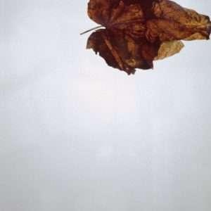 Peter Holst Henkel - Human leaves 5 - Peter Holst Henkel - 4593F
