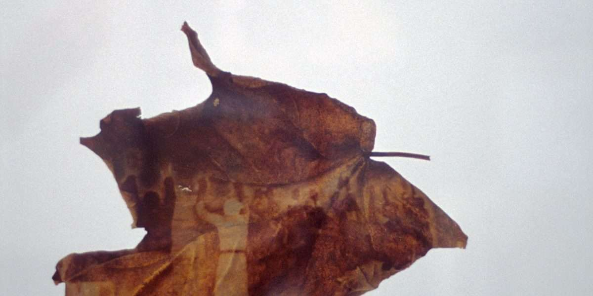 Peter Holst Henkel - Human leaves 7 - Peter Holst Henkel - 4594F