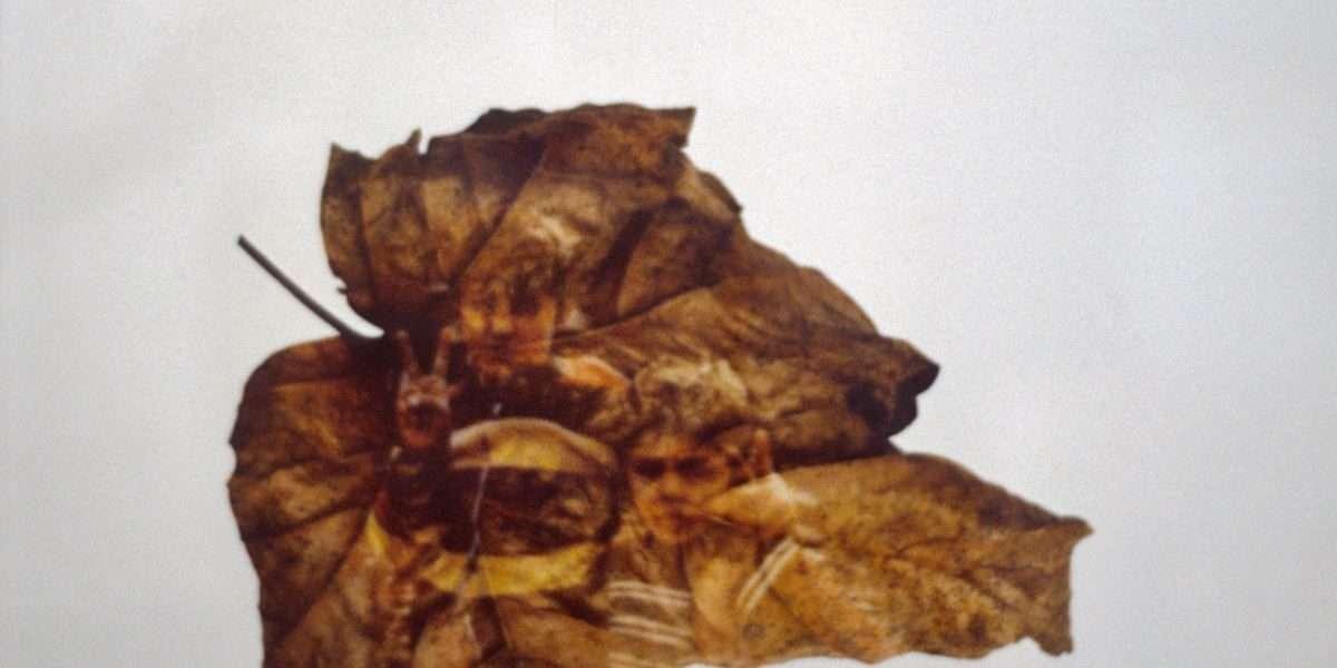 Peter Holst Henkel - Human leaves 16 - Peter Holst Henkel - 4698F